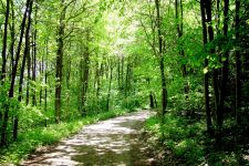 Posadź las i weź pieniądze – nabór wniosków dobiega końca